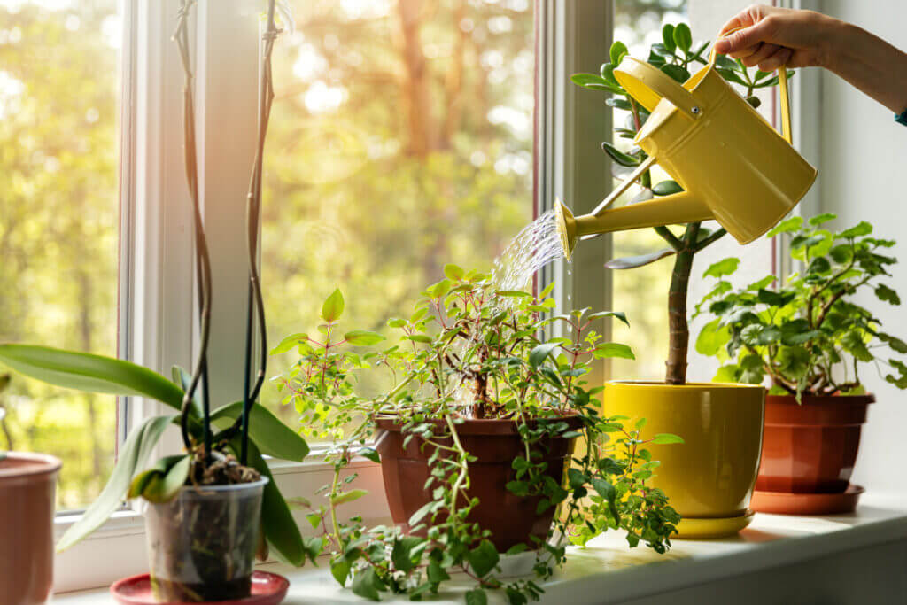 What Does Hard Water Do to House Plants?