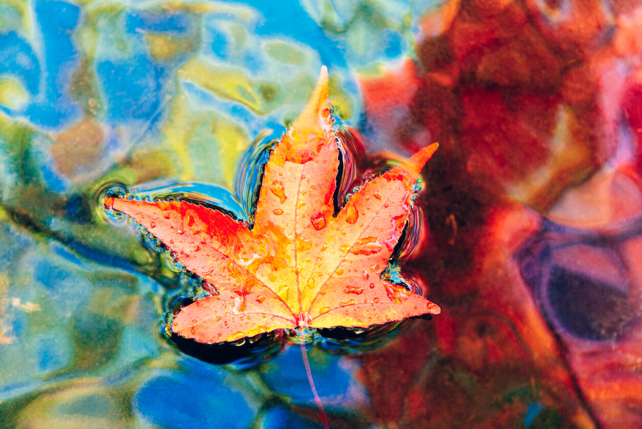 Can Fall Leaves Affect Water Quality?